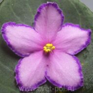 Keiss Heavenly Star (k.Degner)